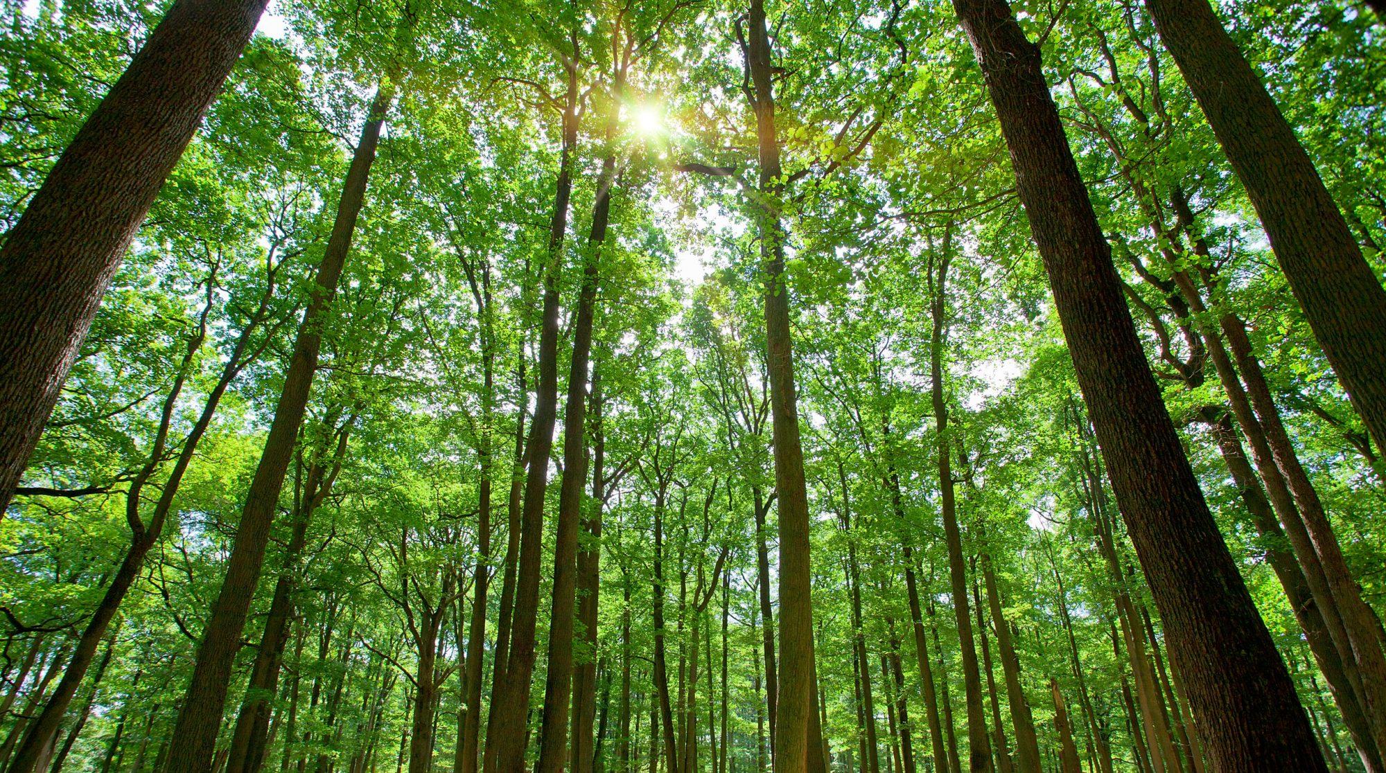 Vi erbjuder professionell trädfällning!